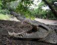 תנין. מפחיד אבל רק בני אדם | צילום: AP
